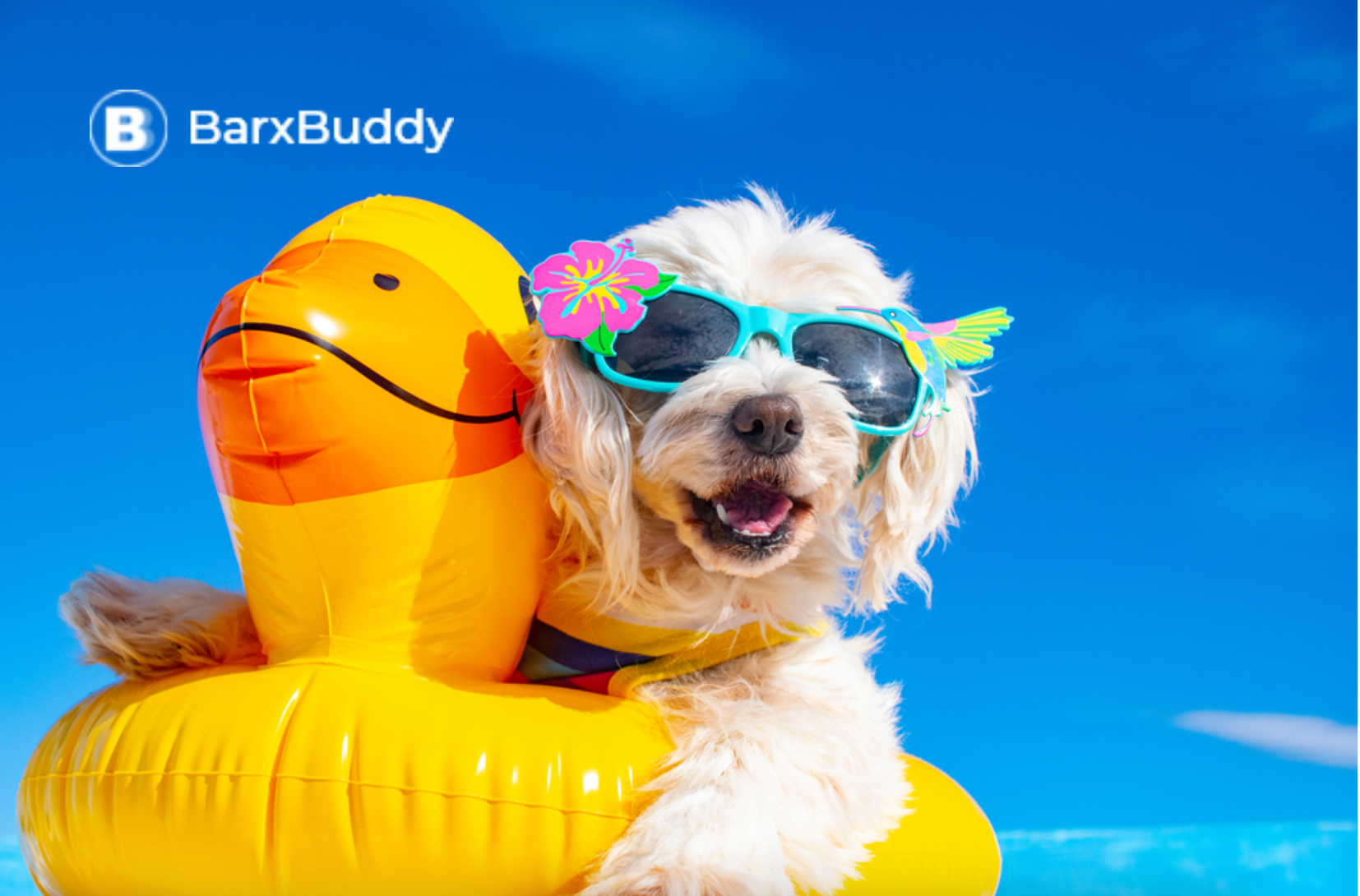Vacation With Dogs: Why I Always Pack My BarxBuddy Busy Ball And BarxBuddy Silicone Dog Bowl